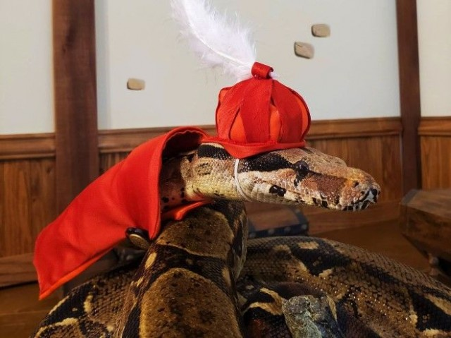 snakes-in-hats1